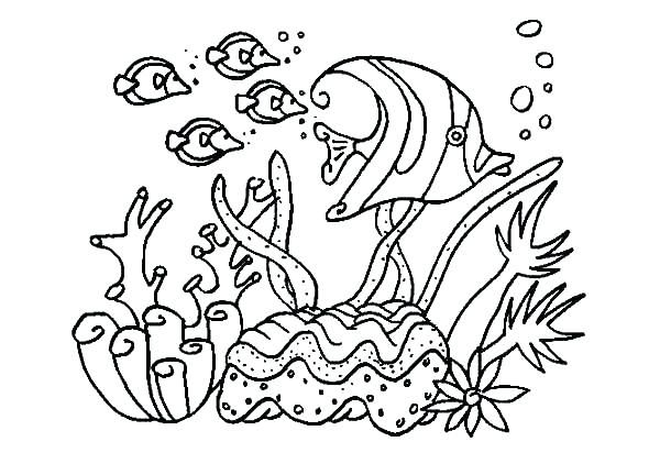 Coral Coloring Pages Kids For Girls In Snazzy Page Printable Draw