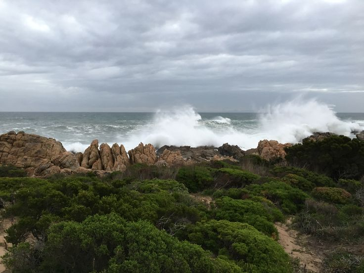 Pringle Bay - June on the Point