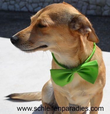Hundehalsband, Hundefliege, Hundeschleife,  18 Fa.