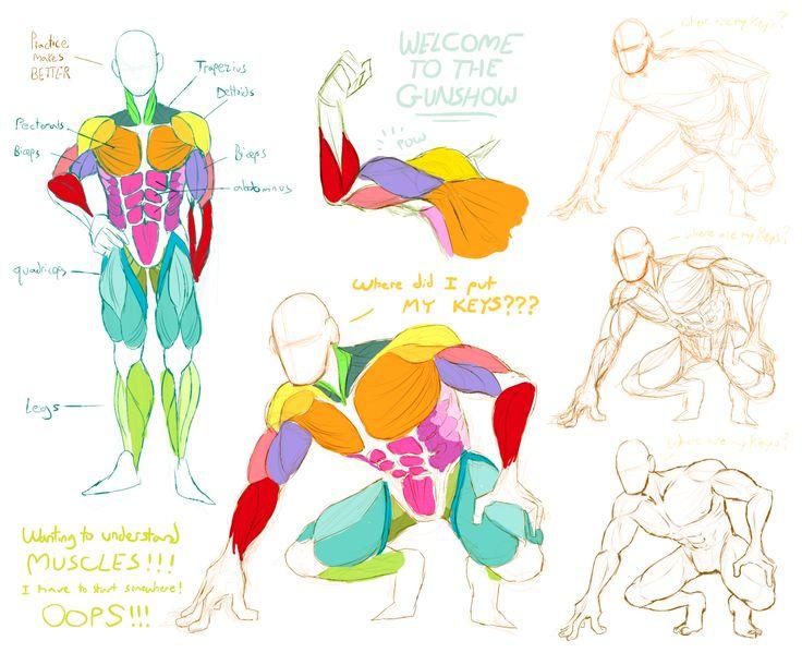 201 Best Anatomy Male Body Images On Pinterest Tutorials Draw