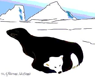 Bear and Seal Optical Illusion-Is that a polar bear or a seal on the cool optical illusion picture below?