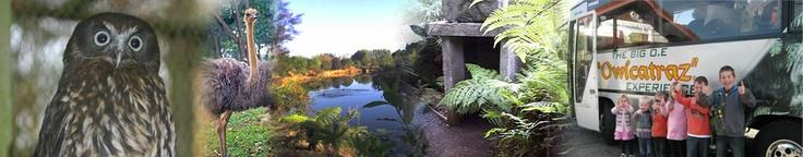 Owlcatraz - native bird and wildlife park. Website features New Zealand native morepork (ruru) owls calling
