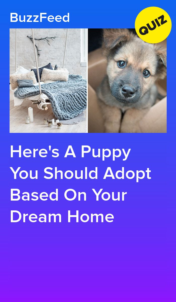 Here S A Puppy You Should Adopt Based On Your Dream Home
