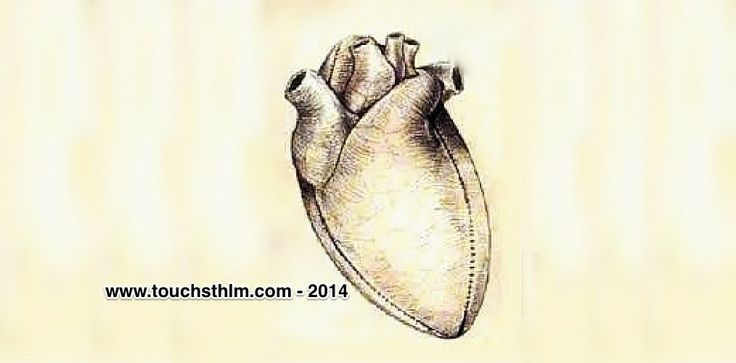 Touch is a good tip for healthy heart