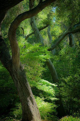 Descanso Forest - California