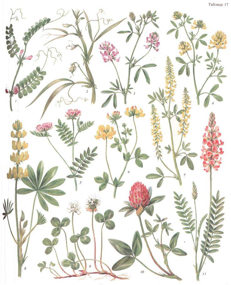 цветы и травы картинки с названиями считал