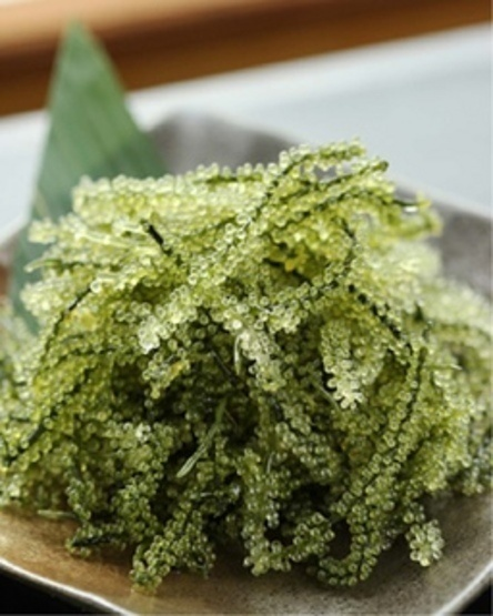 "Umibudo Kelp, aka ""Sea Grapes"" or ""Green Caviar"" - Japan Okinawan Speciality