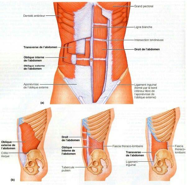 La douleur dans les muscles après