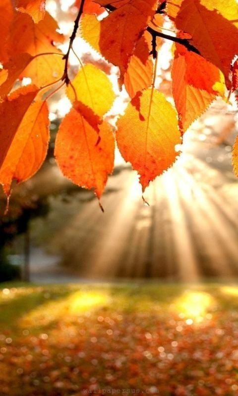 Autumn Leaves Fall Sunlight