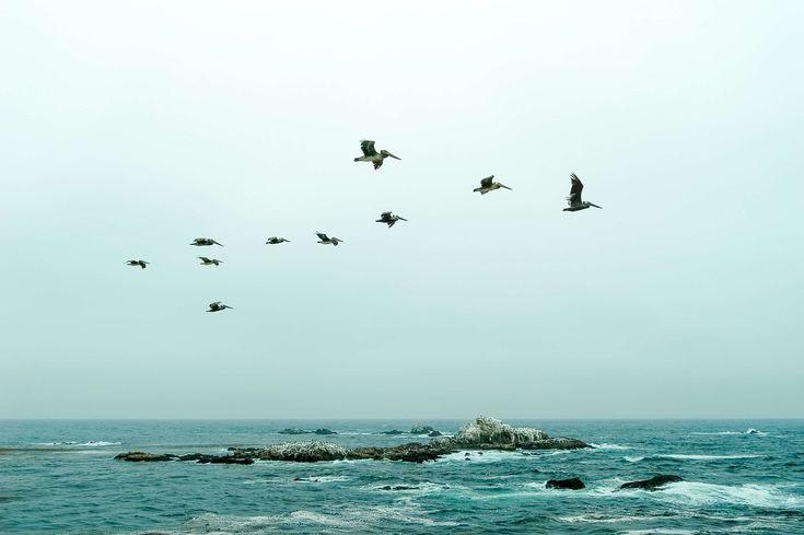 #formation #no people #no person #ocean #pacific ocean #pelicans #pelicans flying #rock #teal #water