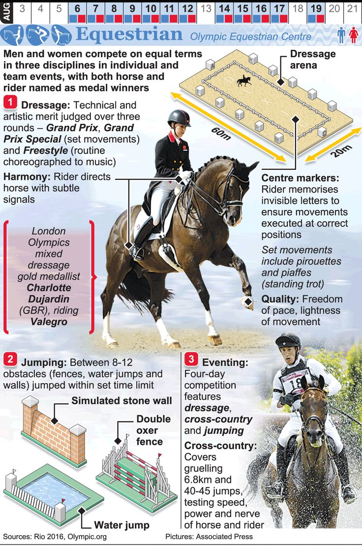 RIO 2016: Olympic Equestrian infographic