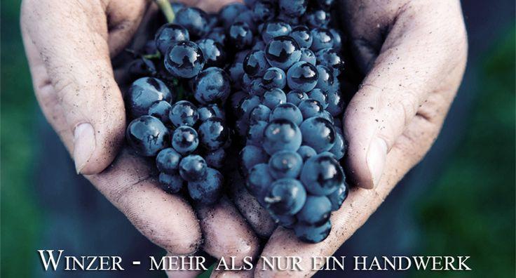 Weingut Alexander Laible