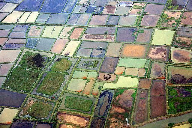 Aerial views of rice fields inIndonesia, Makassar, Sulawesi