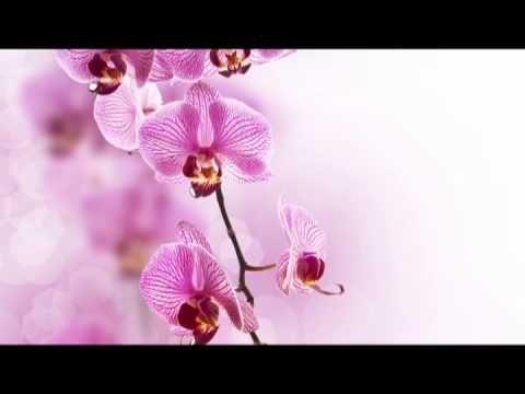 Musique Zen: Musique Relaxante pour Yoga, Meditation et Detente,Spa Musique et Bien-etre - YouTube