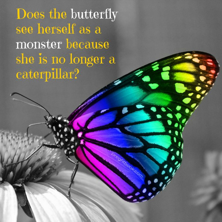 Does the butterfly see herself as a monster because she is no longer a caterpillar?