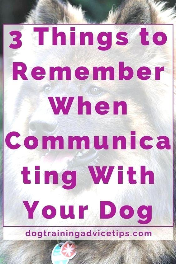Dog Training By Pj Dog Training 08520 Dog Training Revolution