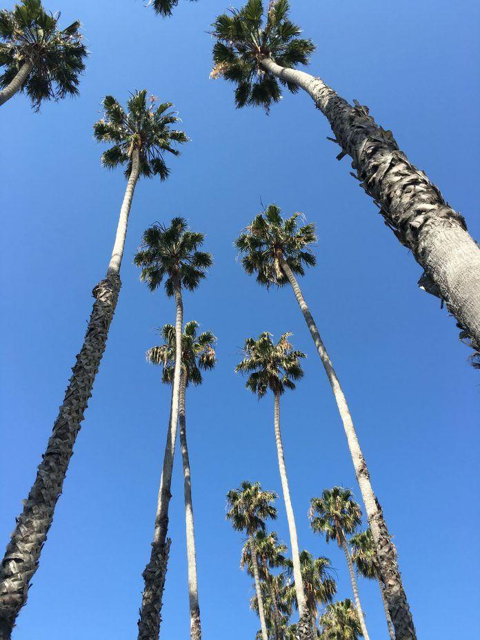 17 meilleures id es propos de californie palmiers sur. Black Bedroom Furniture Sets. Home Design Ideas