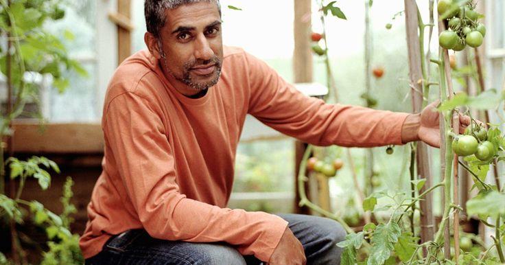 Ideias para escorar uma planta de tomate. Escore uma muda de tomate se você a estiver cultivando em um jardim. Sem apoio, toda a planta vai cair no chão e o tomateiro não produzirá, assim como a fruta provavelmente apodrecerá no solo. Uma planta não escorada nunca vai receber o benefício da luz solar direta em todos os lados, o que contribuirá para uma produção irregular de frutos. Há ...