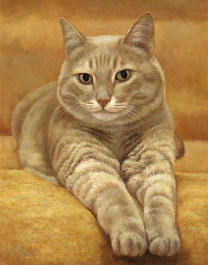 Cat Videos - Learn Cat Care Tips- Cat Breed Information - Know how to taje care of cats at Catsincare.com!