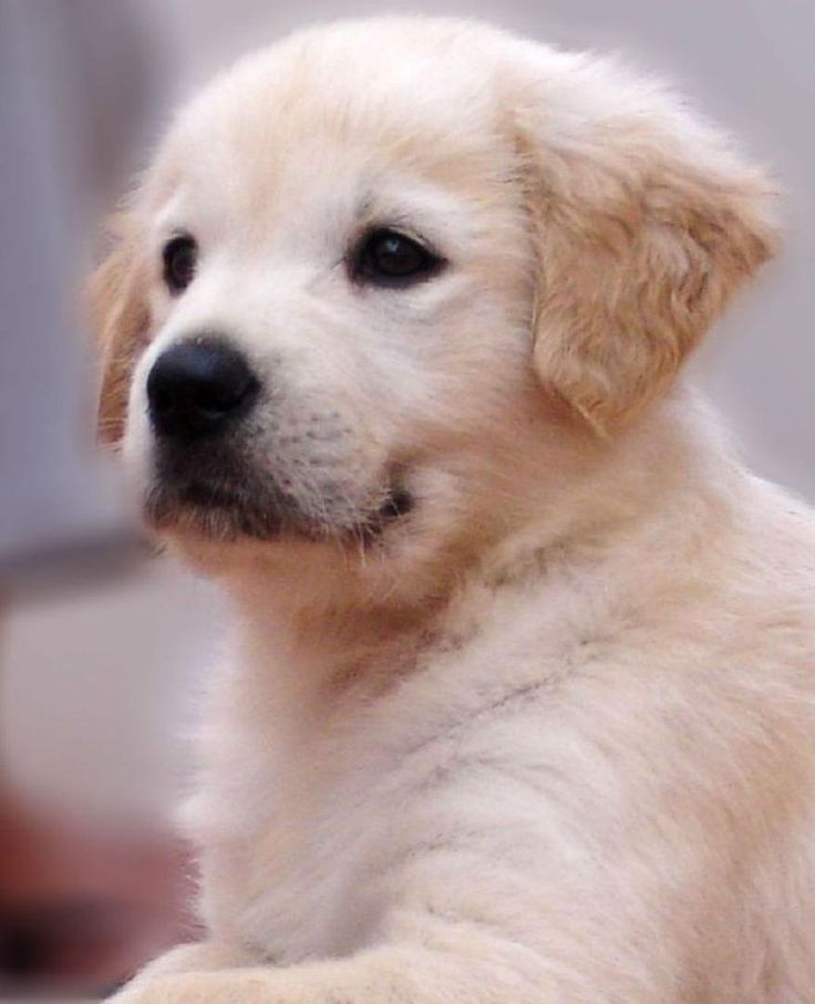 17 Best Ideas About National Puppy Day On Pinterest Easy