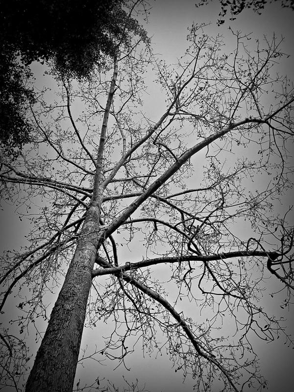 [FOTO] Kerontang at Gembira Loka Zoo - Jogja | KODAK M522, f/3.5 exposure time 1/320 sec, ISO 80, focal length 5 mm, no flash. PhotoScape