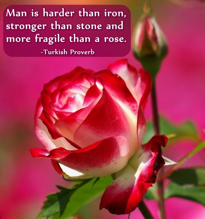 Pretty As A Flower Quotes: 23 Best Quotes & Proverbs Images On Pinterest