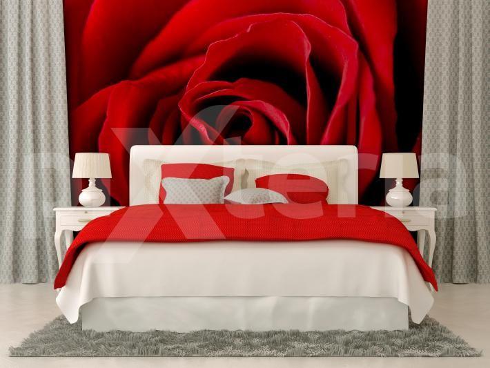 Fototapeta - Czerwona róża