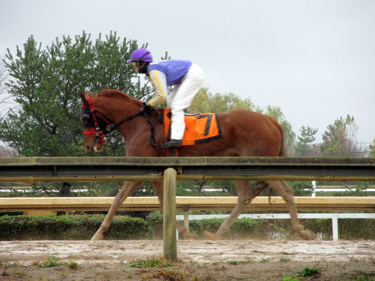 one of my moms horses when it won a race 2013