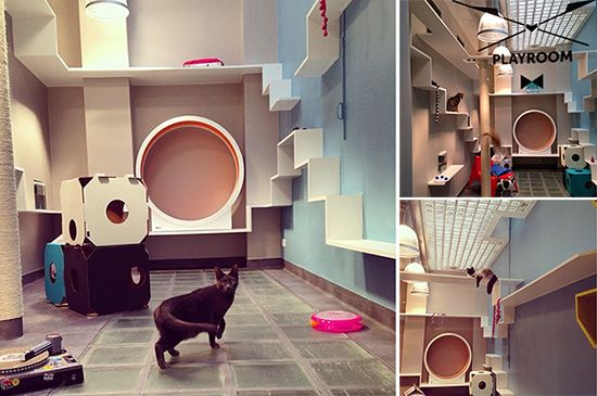 Aristide Hotel for Urban Cats #cats #Catification #CatShelves