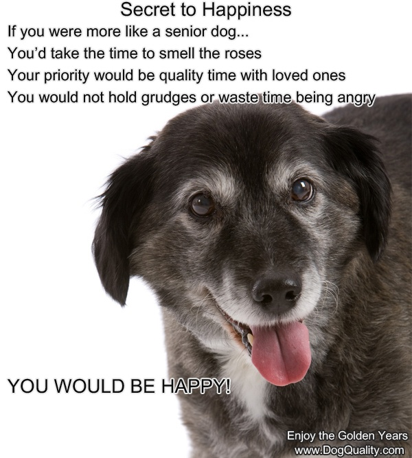 Senior Cat Quotes: The Secret To Happiness Revealed