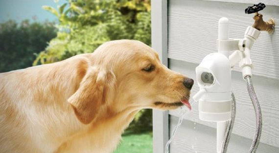 WaterDog plugs into the outdoor hose spigot and uses a motion detector to deliver just that. When it senses your dog approaching, it opens up a gentle flow of drinking water; when she's done and walks away, the flow is cut off. The gadget is great to have for long days away when your pooch is left outside, giving you peace of mind knowing they won't go thirsty. $70