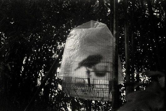 Jing HUANG - Un oiseau effrayé par le froid Pure of sight, 2009