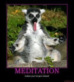 Meditation #FunnyPhotosGR #funnyphotos #funnyanimals