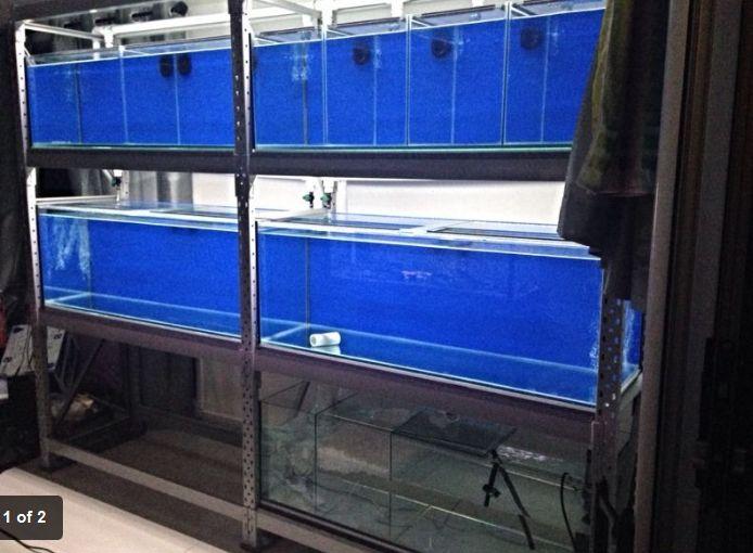 Best 24 fish breeding setups images on pinterest animals for Fish tank rack