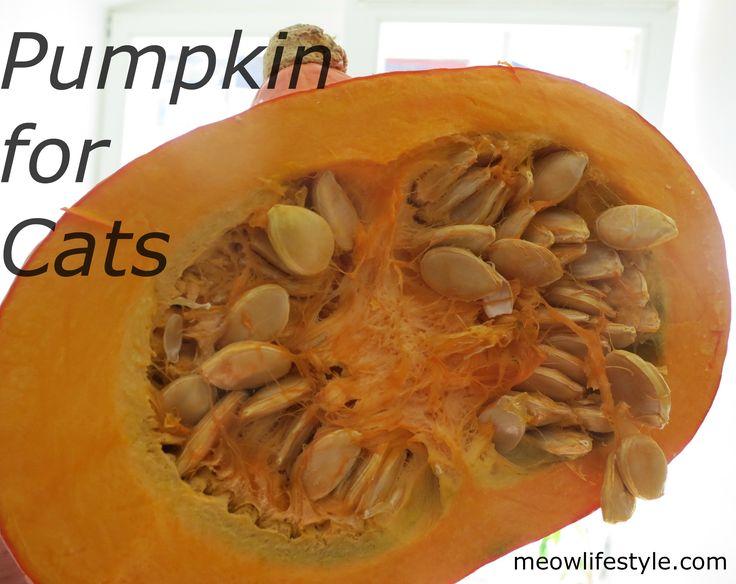 Pumpkin as a fiber source for cats. Cat Nutrition  http://meowlifestyle.com/pumpkin-for-cats-psl-recipe/