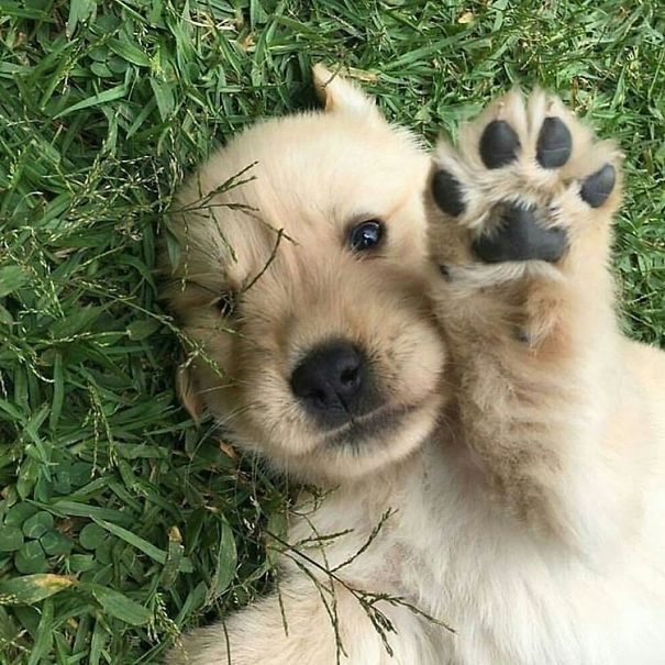 #cutedogs #pets #animals