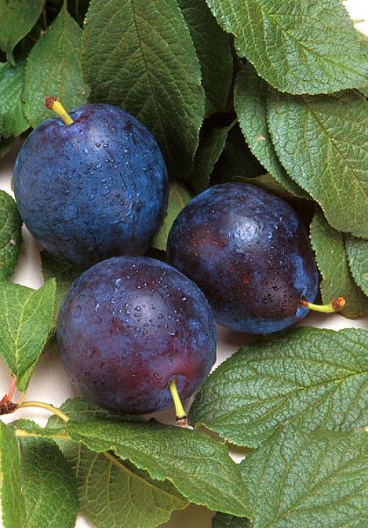 Health Benefits of Plums, Nutrition Facts, Uses for Cooking, Recipes