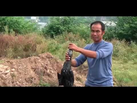 Fishing in China - Как ловят рыбу в Китае - Нанотехнологии - Nanotechnol...