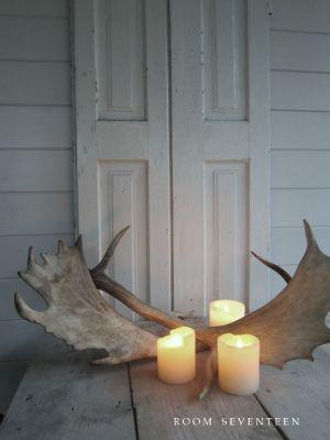 Moose sheds
