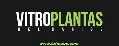 Plantas in Vitro Republica Dominicana - Vitroplantas del Caribe dedicada a la propagación de plantas de Banano, Plátano, Papa, Piña, Yuca y Batata. Vitroplants