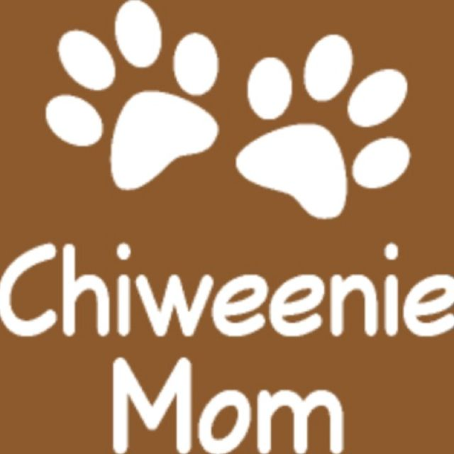Chiweenie Mom... Love love loveee my Princeton Winston ❤️