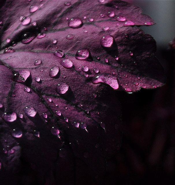 ромашковидную красивые картинки сливовый цвет помещений