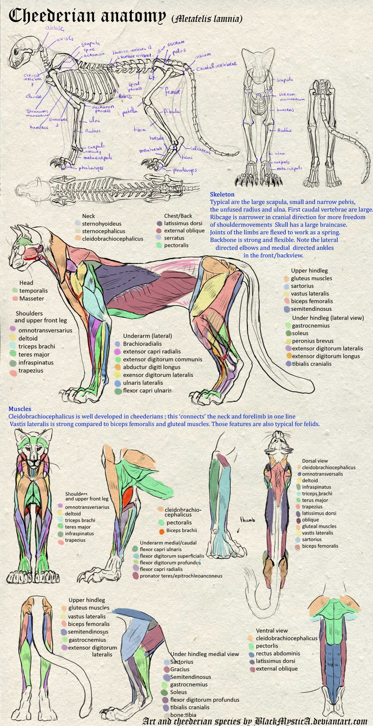 190 best Animal anatomy images on Pinterest | Animal anatomy, Animal ...