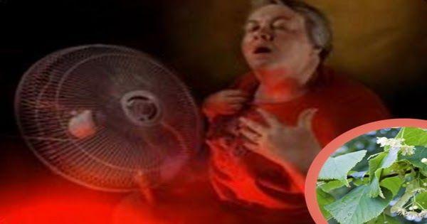 Un articol de Mihaela Iliescu     Florile parfumate de tei sunt de sute de ani remediu pentru calmarea nervilor si a simptomelor de raceala...