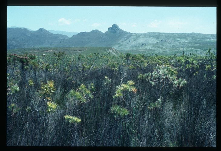 Kogelberg Nature Reserve. Image from the CSIR: Database of Landscape Photographs collection. These landscape photographs provide extensive coverage of several important fynbos biome catchment areas in the Western Cape such as Jakkalsrivier, Jonkershoek, Zachariashoek, Kogelberg and the Cedarberg.