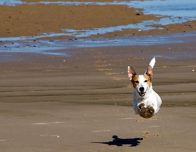 The Flying dog - The strange case of the dog who jumped over his shadow by Franco Ferri Mala, via Flickr