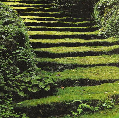 Moss covered steps planted in MA by Fletcher Steele in 1948. I've seen these steps pinned a lot and he doesn't get credit.
