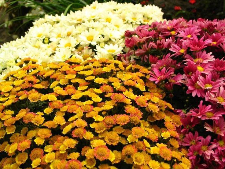 Nyerj páros belépőt az őszi kertészeti napokra: fergeteges programokkal vár a három napos őszi kertészeti kiállítás és vásár https://balkonada.hu/nyerj-paros-belepot-az-oszi-kerteszeti-napokra/