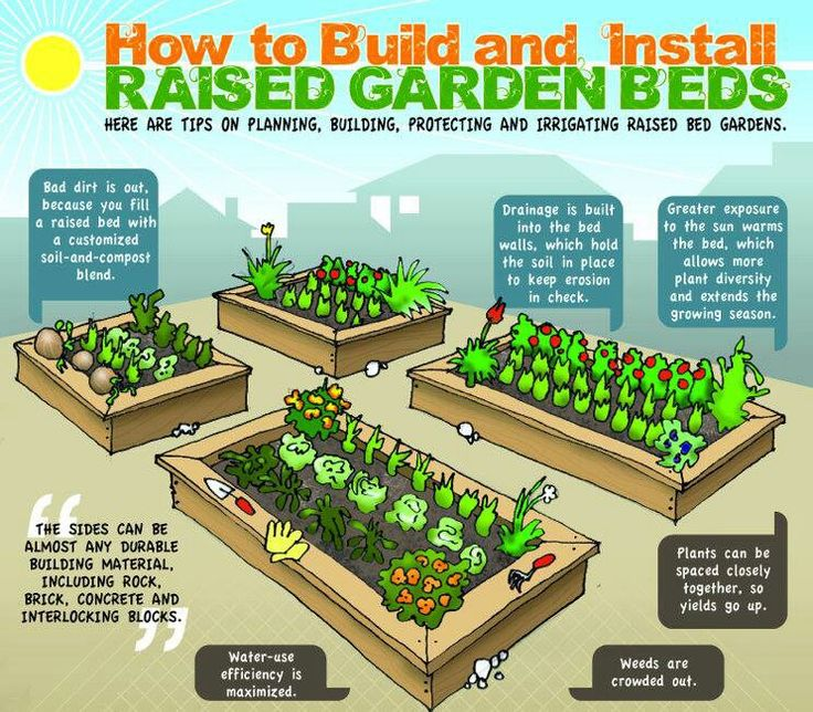 How to build and install raised vegetable garden beds