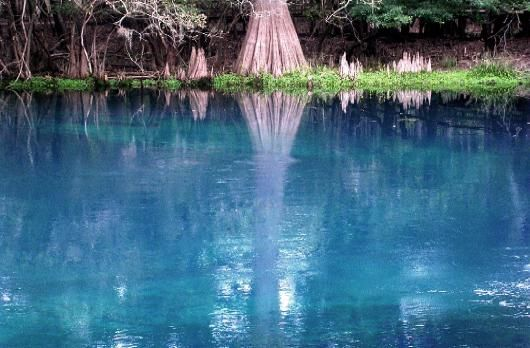 Image of Reflection of cypress trunk and knees in the waters of Manatee Spring.